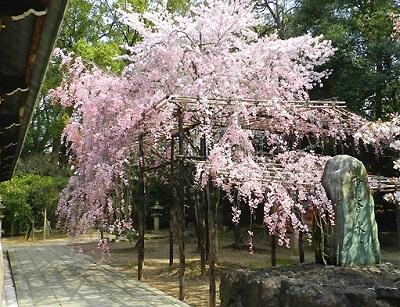 seasonal landscape of Japan in Spring