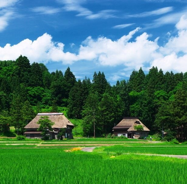 Japanese traditional color pallet for art, beautiful paddy field colors