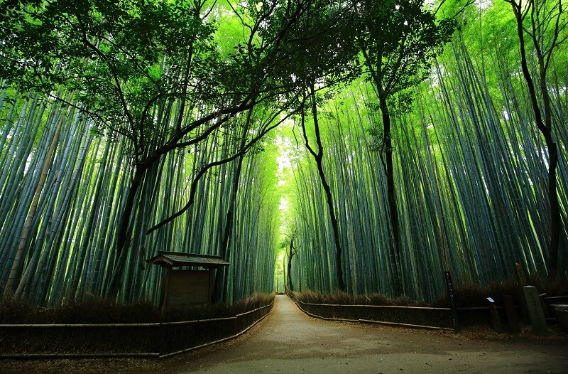 Japanese bamboo forest and passway