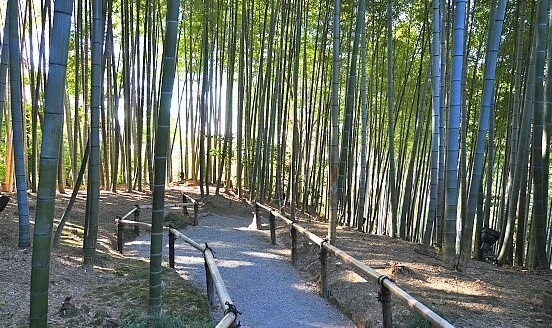 bamboo forest and small pass way with bamboo guides