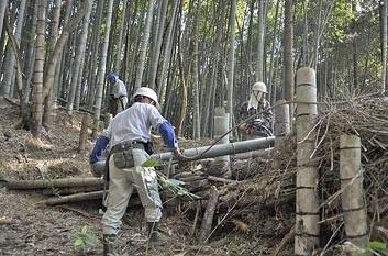 cutting bamboo borest