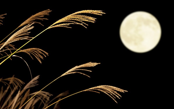 Japanese moon viewing, Japanese pampas grass and the moon